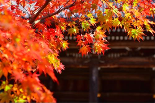 欧神诺瓷砖:秋分时节,送你一份秋日的独家回忆