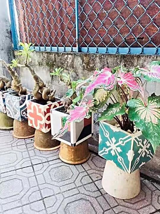 瓷砖花池图片